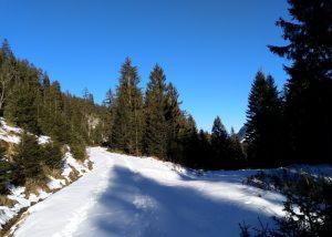 Forstweg Vorwinderwanderweg Baichlsteinrunde.