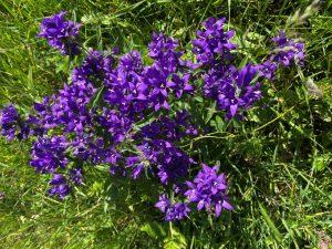Blumenpracht im Lechtal.