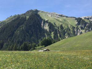 Berglandschaft und Wiesenblumen.