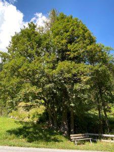 Verweilen unter Bäumen auf einer gemütichen Sitzbank im grünen Lechtal.
