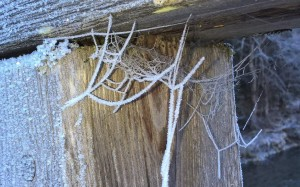 Raureif Spinnennetz beim Wandern im Natura 2000 Gebiet.