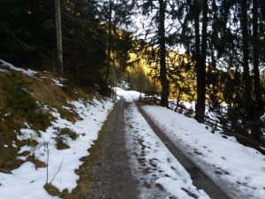 Forstweg Einstieg Baichlsteinrunde bei Vorderhornbach.