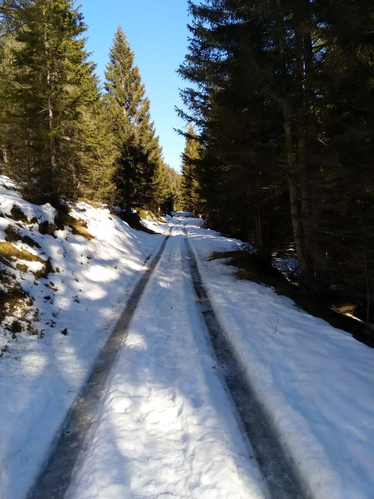 Forstweg Baichlsteinrunde in der Vorwinterzeit.