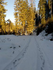 Forstweg Richtung Stanzach-Vorderhornbachrunde