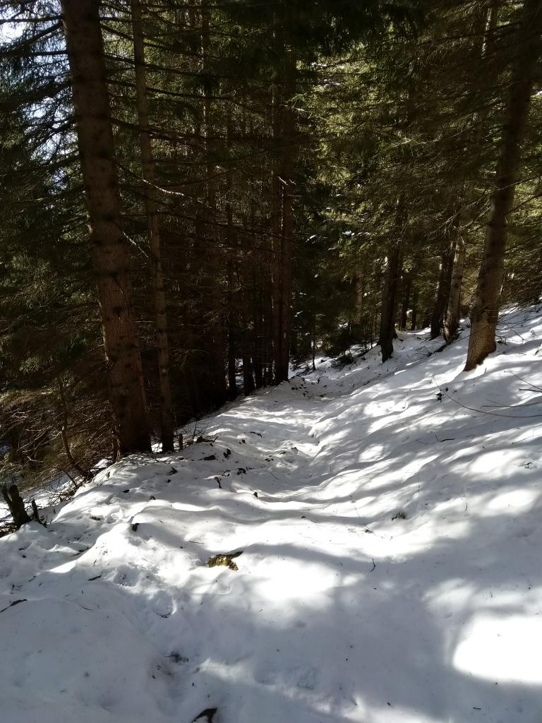 Wanderroute im schützenden Wald.