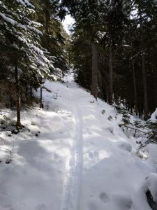 Waldstrecke Winterwandern mit Schneeschuhen.