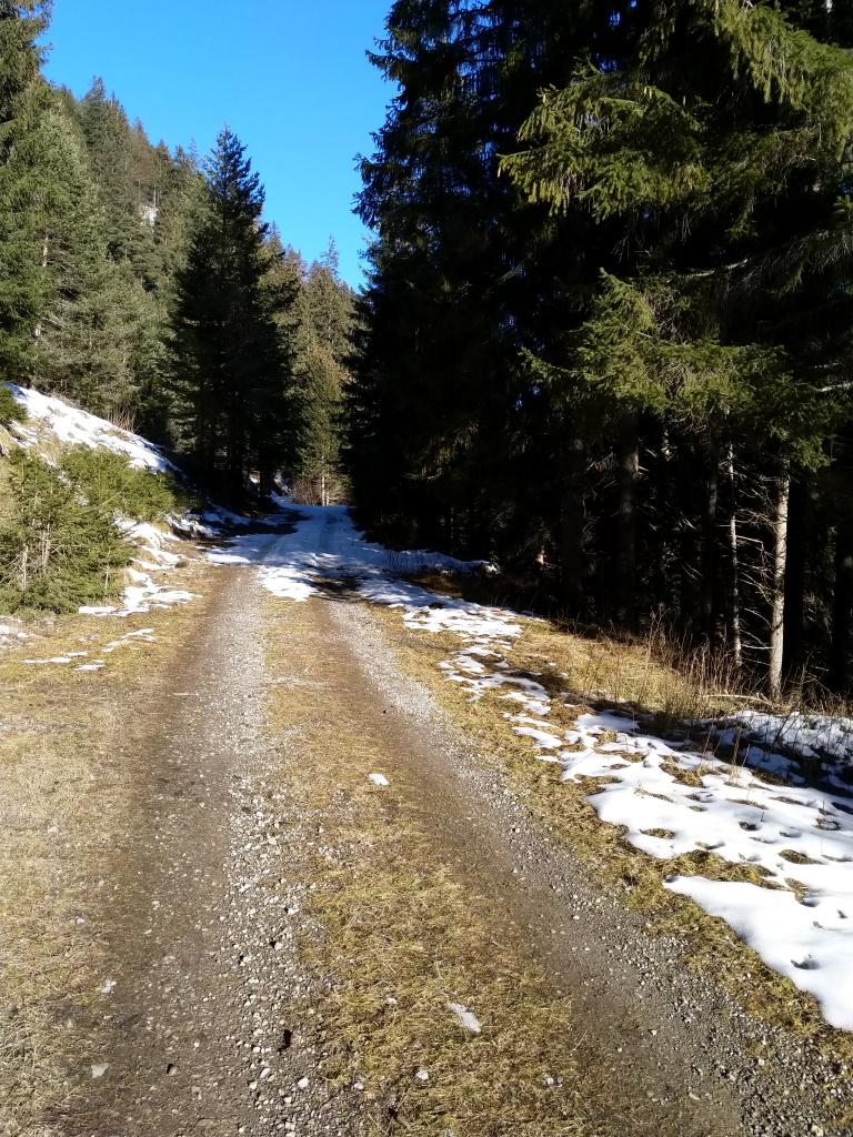 Forstweg erstes Drittel Baichlsteinrunde Vorderhornbach.