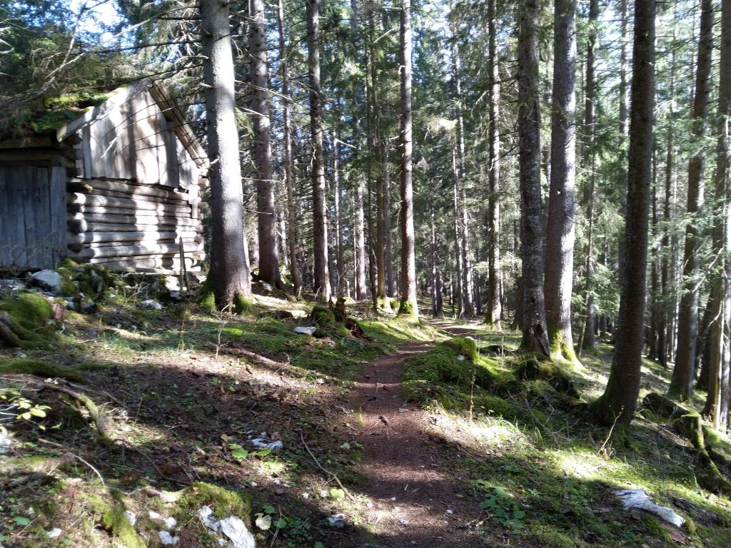 Wald-Spa im Erlebnisweg in Holzgau