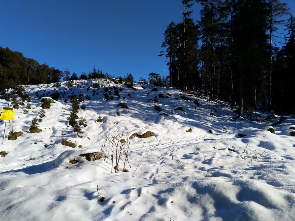 Abschlusssteigung Forstweg Baichlsteinrunde