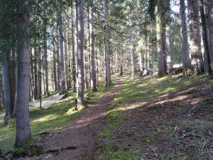 Vital und Erlebnis-Vital-Wald-Weg in Holzgau