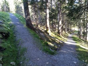 Start-Ende Waldrunde Vitalweg Holzgau