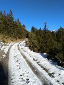 Forstweg erstes drittel Höhenweg Baichlstein.