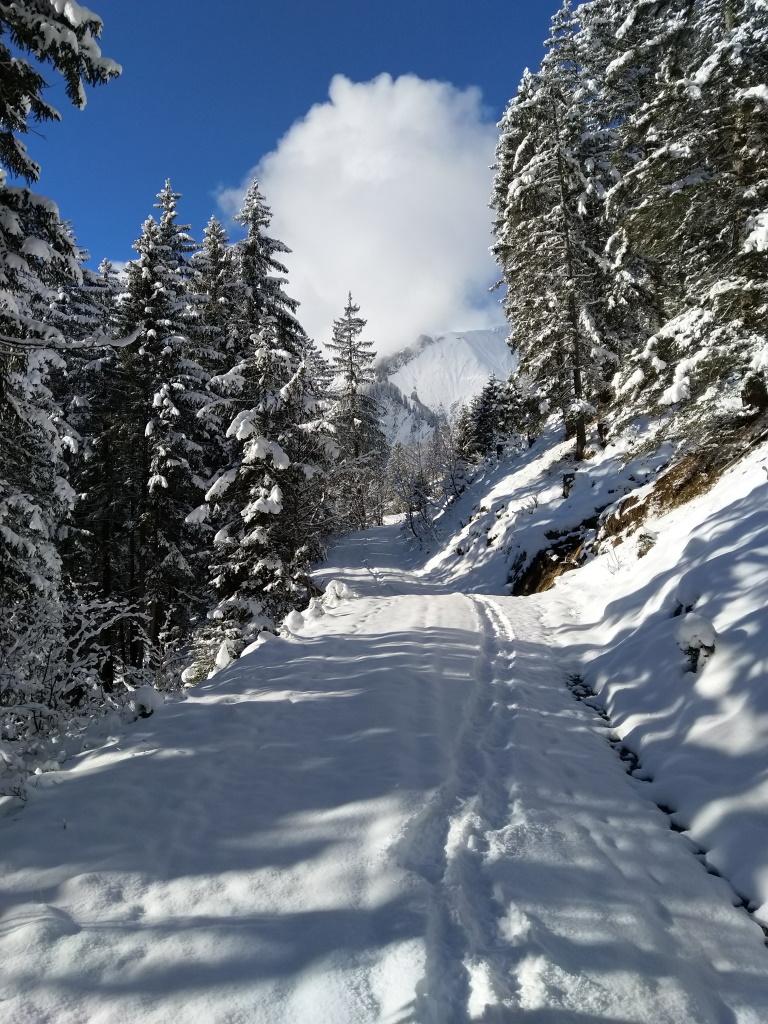 Forstweg in der Vorwinterzeit beim Schneeschuh-Spaziergang.