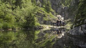 Wald, Wasser und Ruhe.