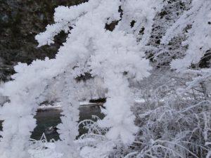 Eiskristallgehüllte Zweige am Lech durch Raureif